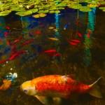 """Fish Red no. 1"" by Karl F. Stewart, Germany"
