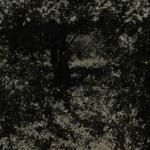 """Un balcon en forêt"" by Fiona Weir, NL"