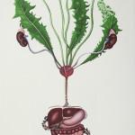 """Taraxacum officinale Wiggers"" by Veerle Ritstier, 40*80cm, 2015, NL"